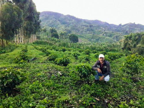 Colombia-Edgar-Motta-cafe-especialidad-tueste-filtro-pink-bourbon-natural-1080x1080-Puchero-finca-postal-01